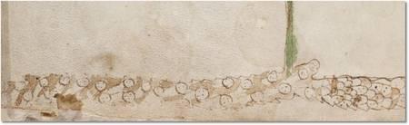 Die breite Wurzel der Seerose aus dem Voynich-Manuskript