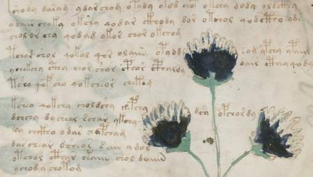 Eine Unterbrechung des Textflusses durch eine Pflanze